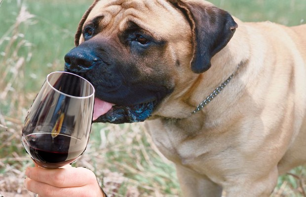 Heavy Petting: Beer & Wine for Your Cat or Canine